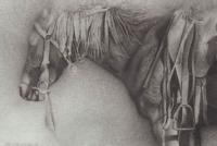 Drover\'s Horse
