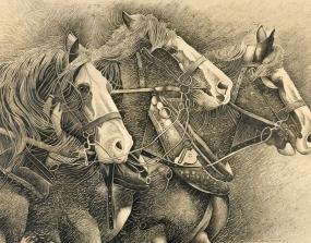 Working horses TEBA307